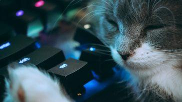 cyberattaque meow